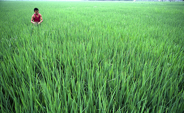 Farming for Development: Agriculture in China